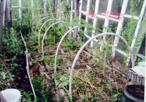 Подсудное огородничество